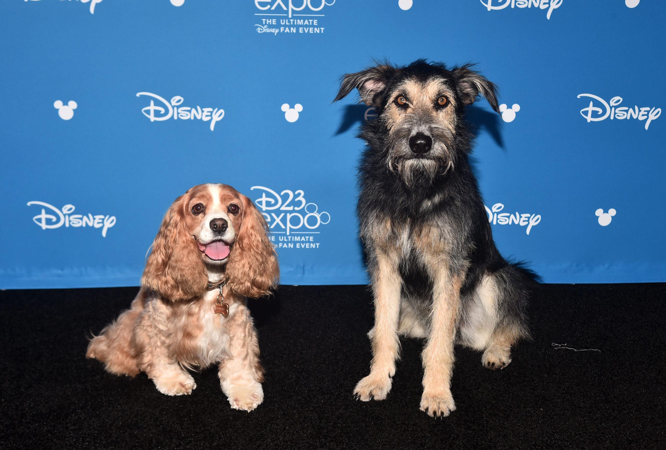 A Dama e o vabundo-Cachorros que protagonizaram o filme