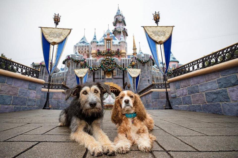 Cachorros do live action de A Dama e o Vagabundo visitam a Disney