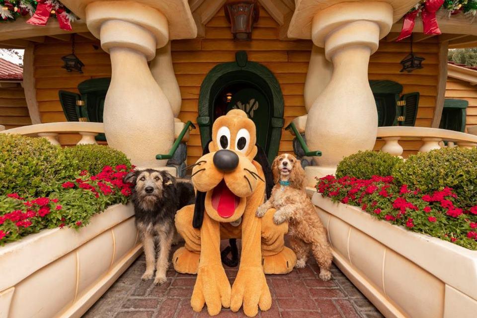 Os cachorros que protagonizaram o filme a Dama e o Vagabundo encontram o Pluto