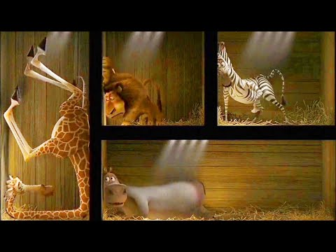 os animais dentro da caixa